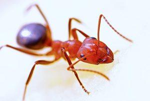 jak-se-zbavit-mravencu